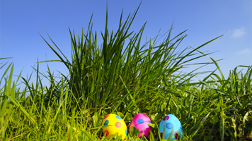 Don't make finding content in your Intranet an Easter Egg hunt!